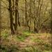 A walk through the woods by judithdeacon