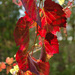 Autumn Colour by salza