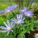 colour spring anemones by sarah19