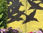 18th Aug 2010 - Birds in Flight