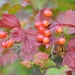 Red berries by overalvandaan