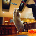 White Cats Can Jump by helenw2