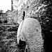 Stone arch by vikdaddy