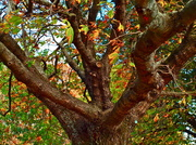 29th Apr 2013 - The Colours of Autumn