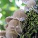 fungi love by kali66