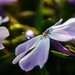 Mysterie flower by nicoleterheide