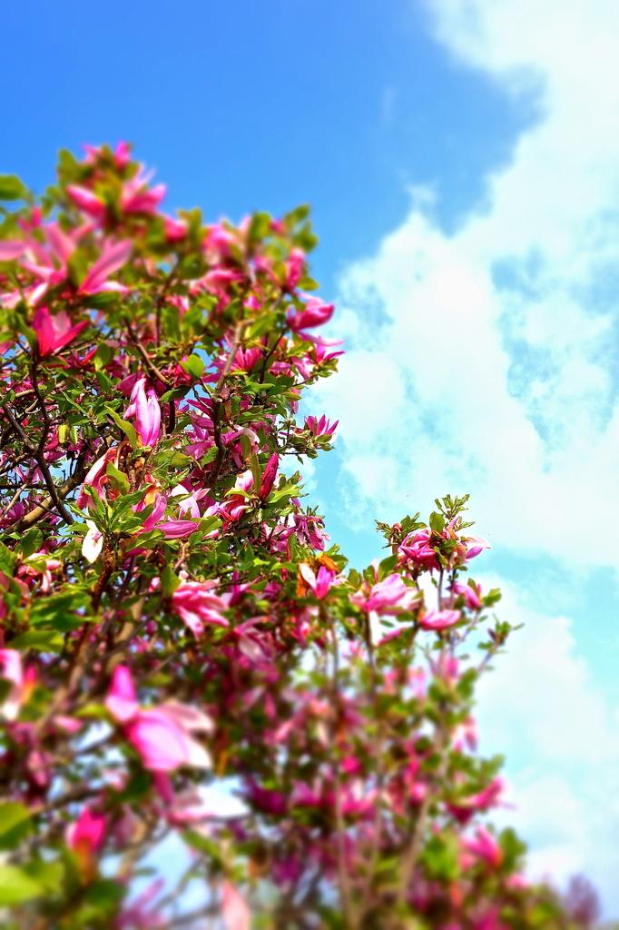 The enchanted tree by cocobella