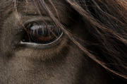 6th May 2013 - Eye of the horse.