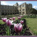 Tulips at Audley End by busylady