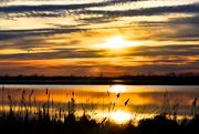 6th May 2013 - Sun Glow Reeds