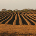 Ploughing a straight furrow by angelar