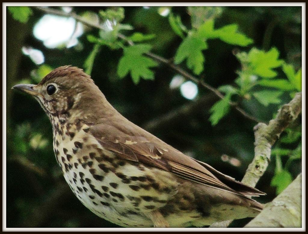 Shy bird 2 by rosiekind