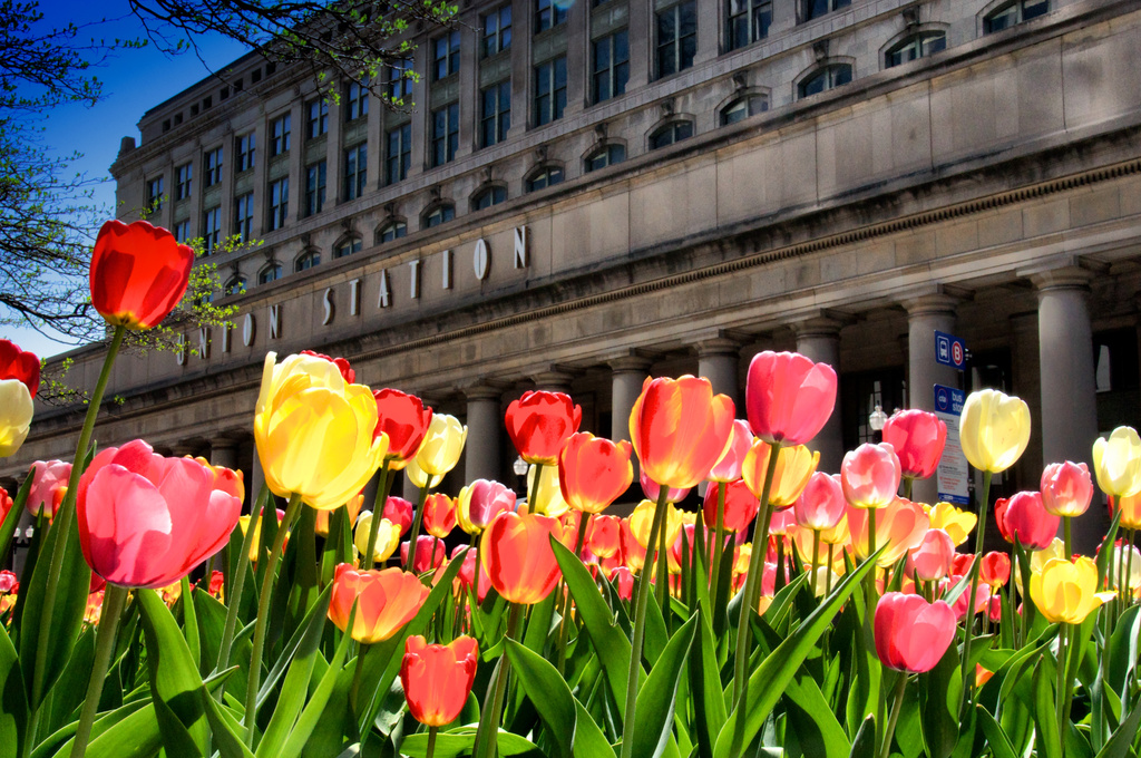 Union Station in Spring by taffy