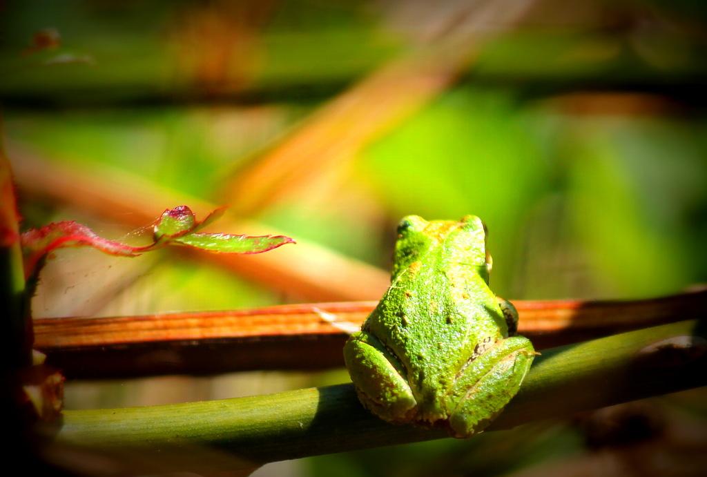 Bye-Bye Froggy by jankoos