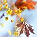 New Fresh Leaves by myhrhelper