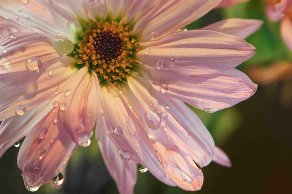 Rain Drops by exposure4u