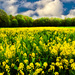 Sea of Mustard by skipt07