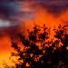 The Burning Bush by kazlamont