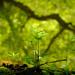 Live Life Abundantly by alophoto