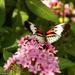 Butterfly by danette