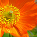 First flower. by darrenboyj