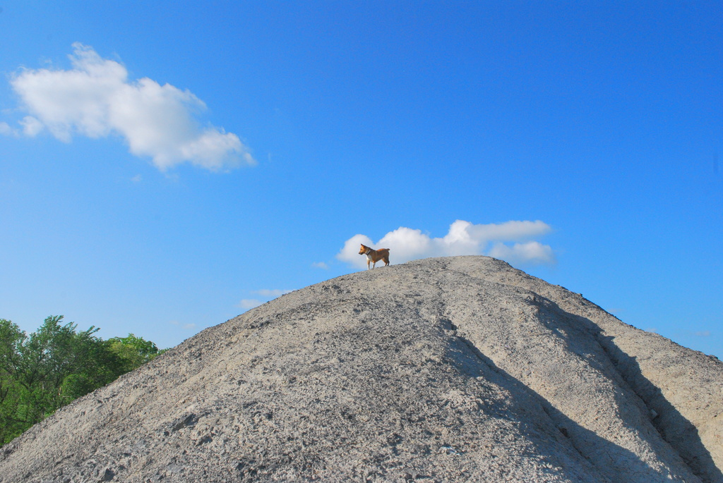 King of the Hill by kareenking