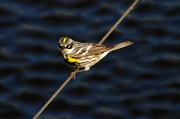 13th May 2013 - Bird on a wire