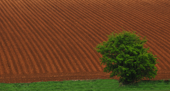 field and tree  by seanoneill