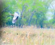 18th May 2013 - Big Bird - Get Pushed - Motion Blur or Panning shot