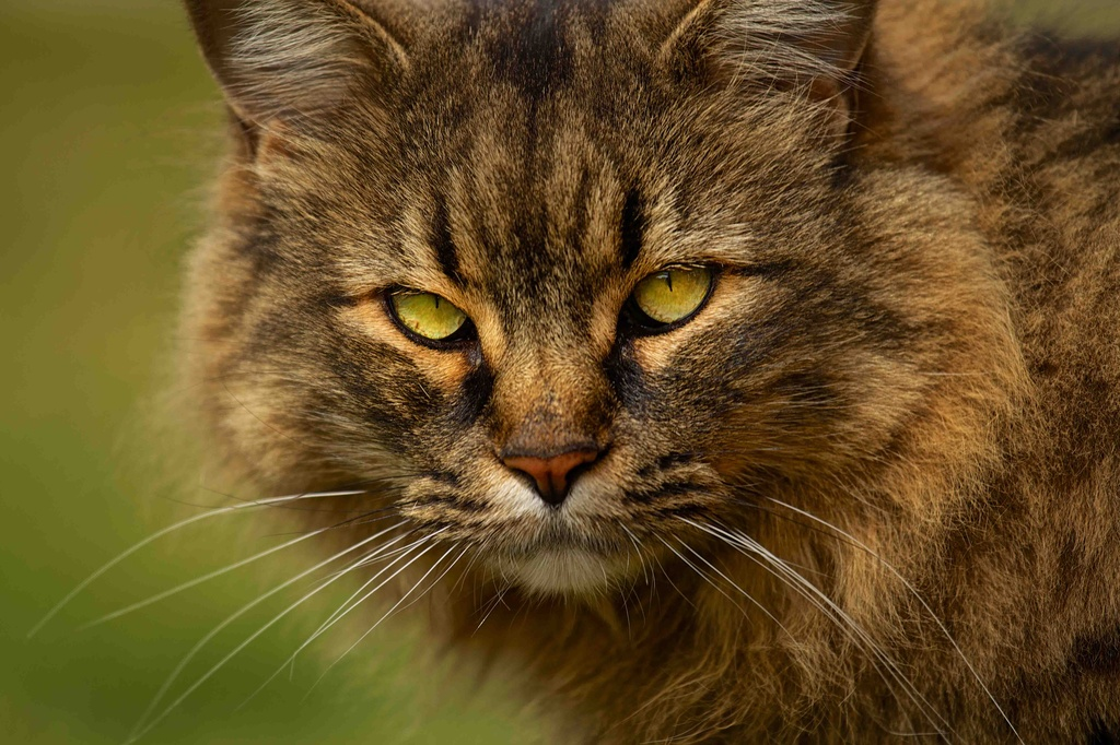 On the Prowl by exposure4u