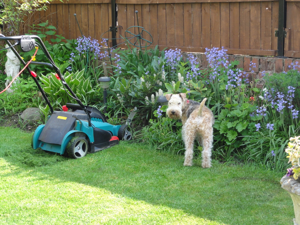 Mum ,look !! he's gone & left the mower !!  by beryl