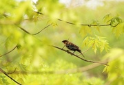 19th May 2013 - bird in a branch