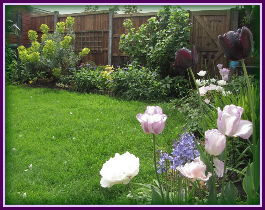 A corner of my garden by busylady