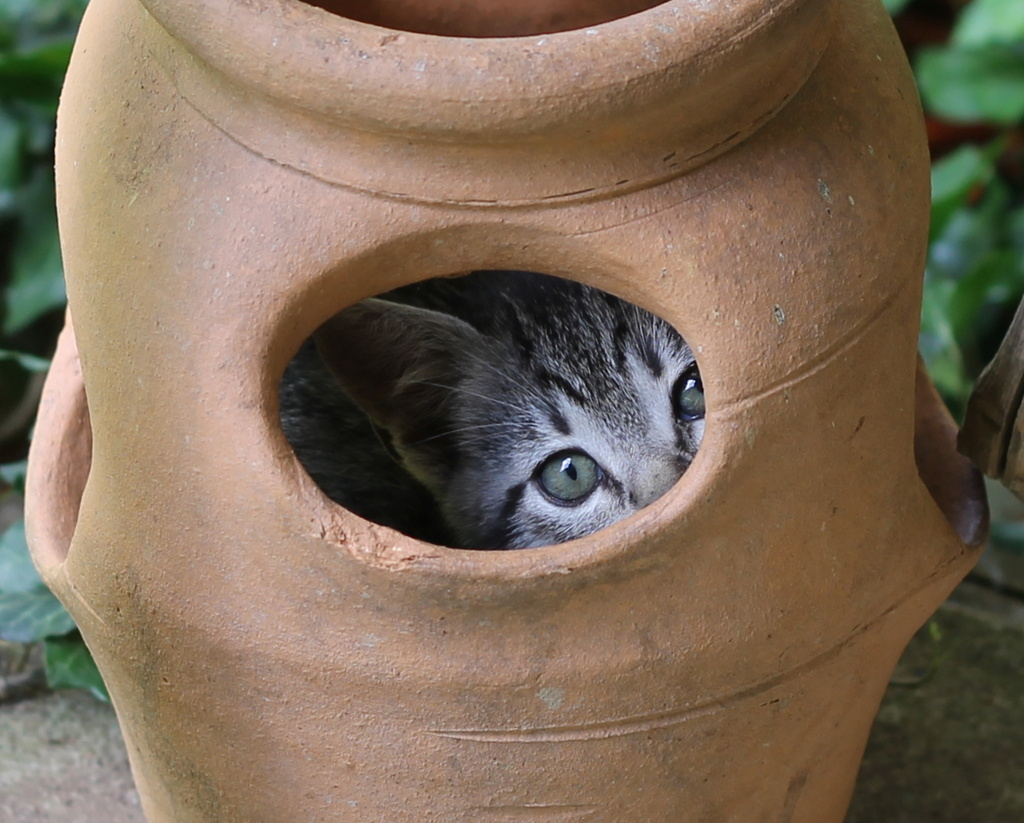 Cat planter by cjwhite