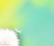 23rd May 2013 - Umbrella Seed