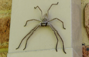 25th May 2013 - Incy Wincy Spider