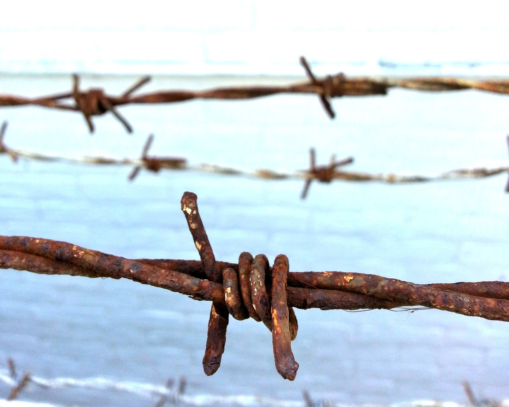 Barbed Wire by philr