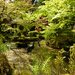 Japanese garden, Tatton by janturnbull
