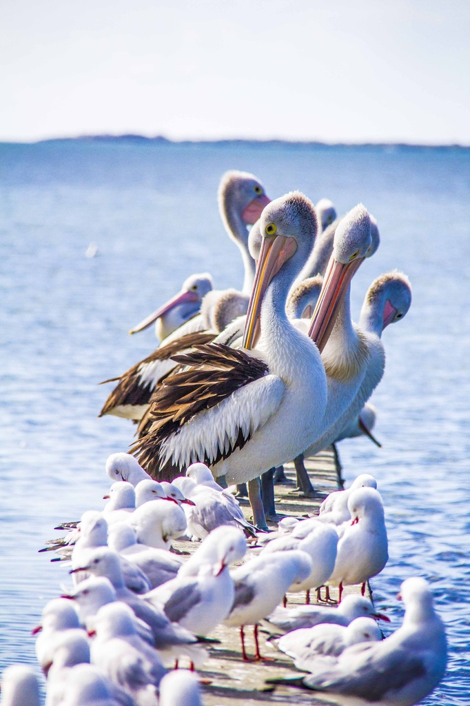 sea birds by corymbia