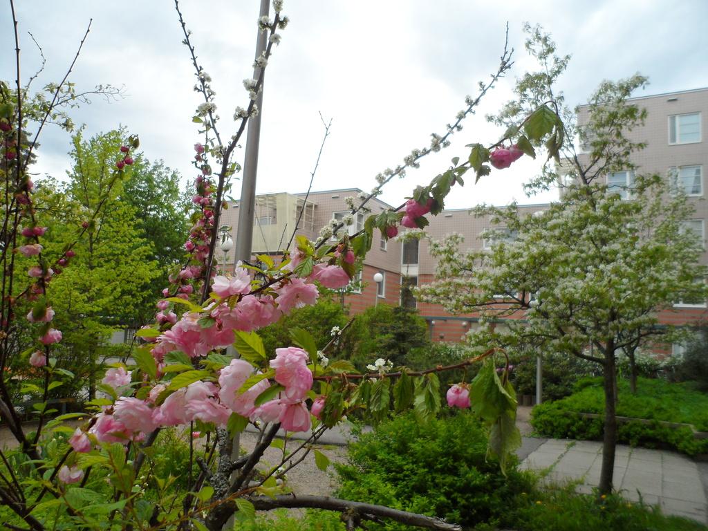 La vie en rose by tiss