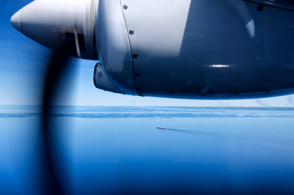 Flight in Motion by taffy