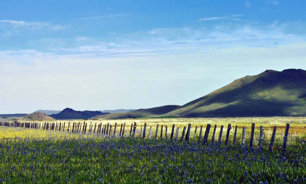 Camas Prairie by pflaume