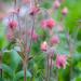 Flowers in Garden by myhrhelper