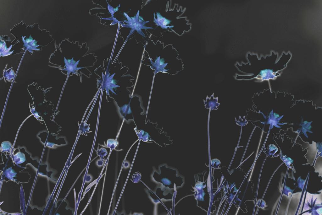 Dark Daisies by alophoto