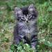 A baby Fuzzy by cjwhite