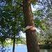 Hug a tree  by bizziebeeme