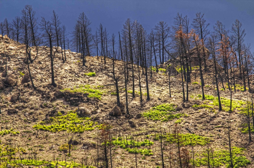 Recovering After the Fire by exposure4u