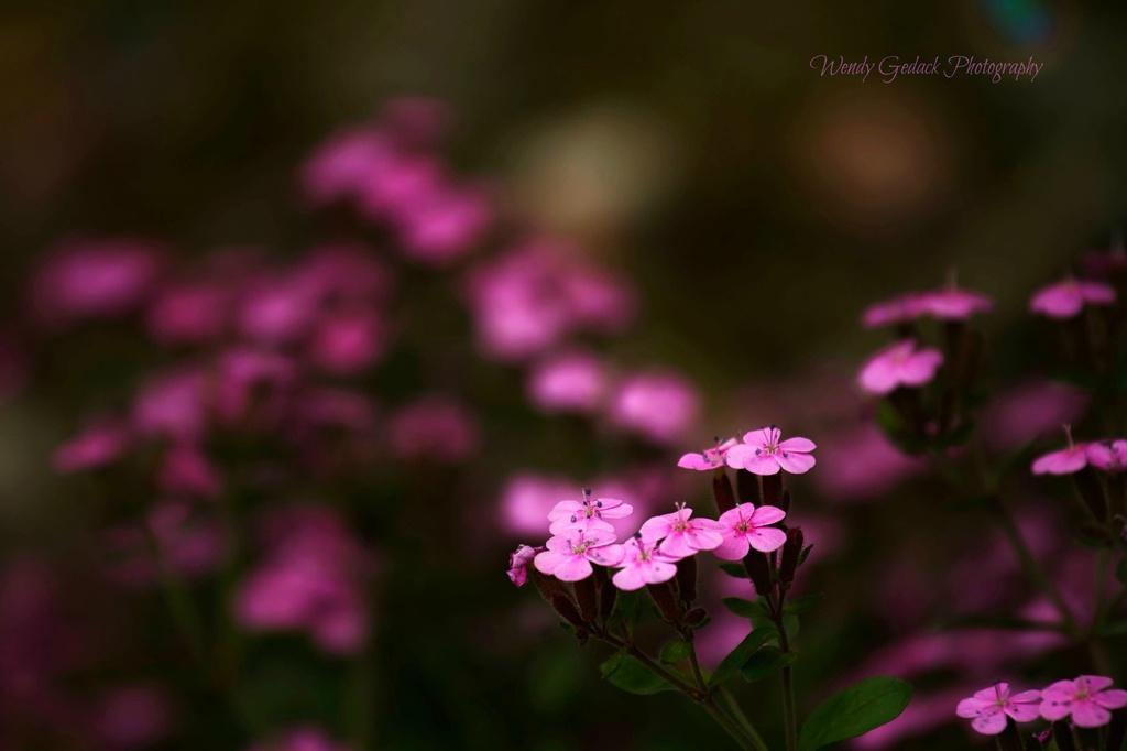 Blooming Flowers by exposure4u