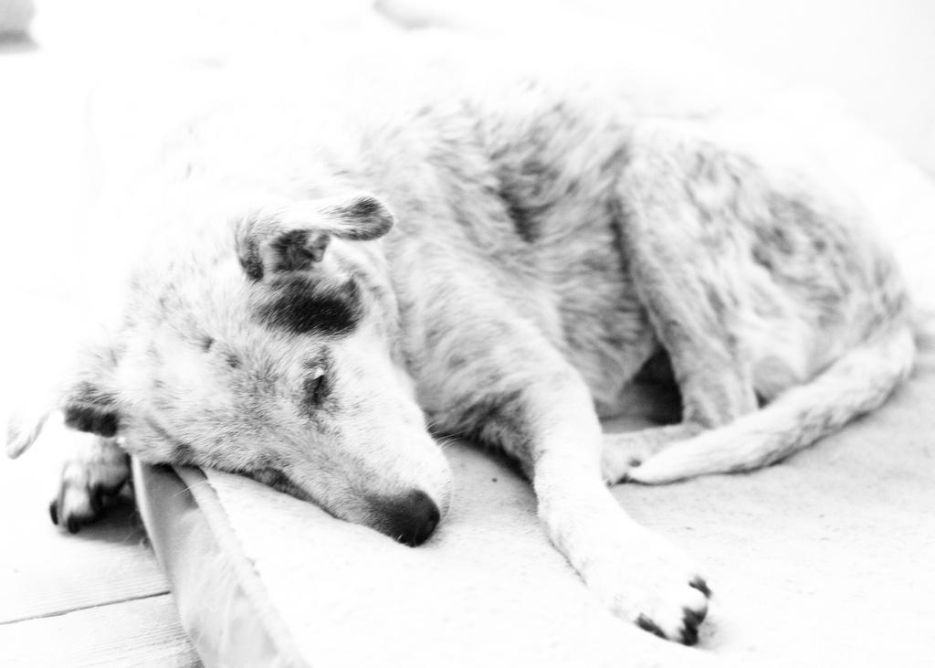 Macdeafdog by riverlandphotos
