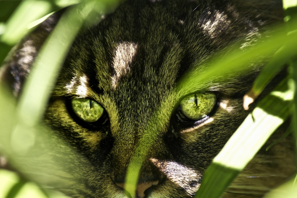 It's a Jungle Out There by exposure4u